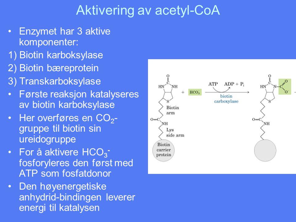 Aktivering av acetyl-CoA •Enzymet har 3 aktive komponenter: 1) Biotin karboksylase 2) Biotin bæreprotein 3) Transkarboksylase •Første reaksjon katalys