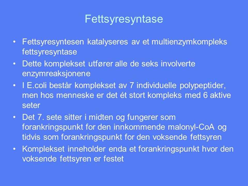 Fettsyresyntase •Fettsyresyntesen katalyseres av et multienzymkompleks fettsyresyntase •Dette komplekset utfører alle de seks involverte enzymreaksjon