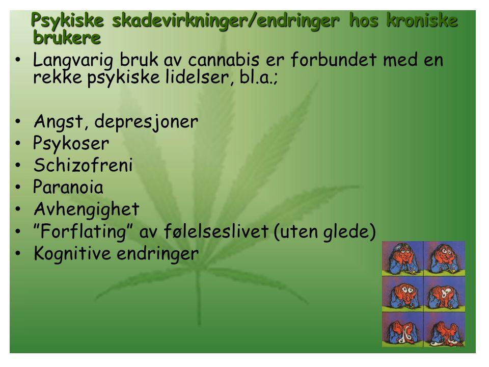 Psykiske skadevirkninger/endringer hos kroniske brukere • Langvarig bruk av cannabis er forbundet med en rekke psykiske lidelser, bl.a.; • Angst, depresjoner • Psykoser • Schizofreni • Paranoia • Avhengighet • Forflating av følelseslivet (uten glede) • Kognitive endringer