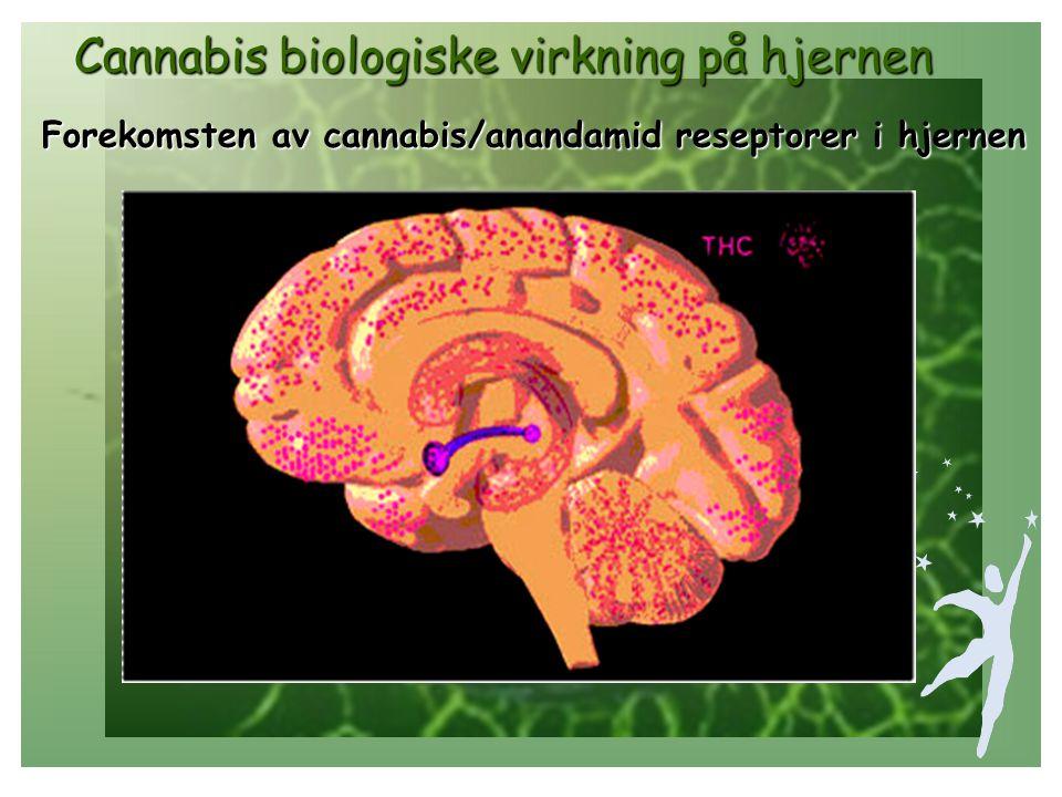 Cannabis biologiske virkning på hjernen Cannabis biologiske virkning på hjernen Dopamin Glutamat Endorfin Noradrenalin Serotonin