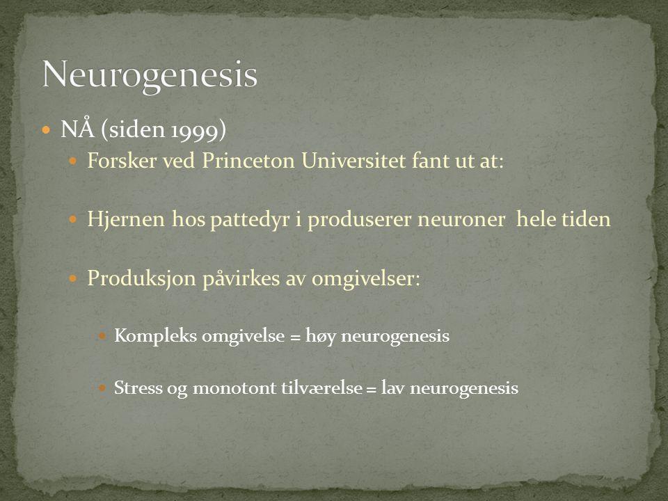  NÅ (siden 1999)  Forsker ved Princeton Universitet fant ut at:  Hjernen hos pattedyr i produserer neuroner hele tiden  Produksjon påvirkes av omgivelser:  Kompleks omgivelse = høy neurogenesis  Stress og monotont tilværelse = lav neurogenesis