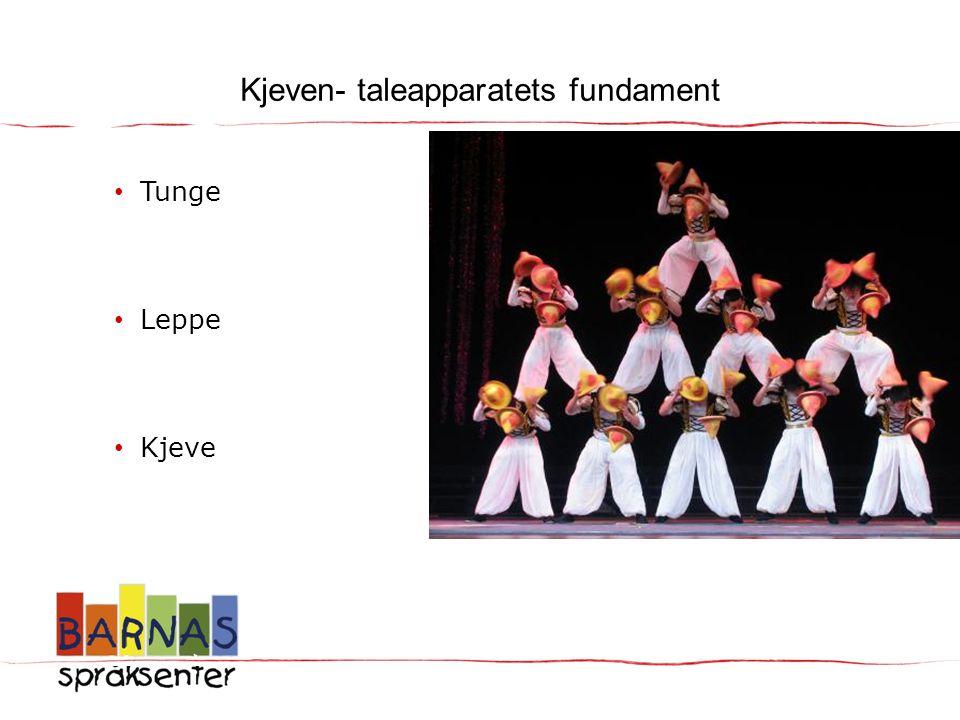 Kjeven- taleapparatets fundament • Tunge • Leppe • Kjeve