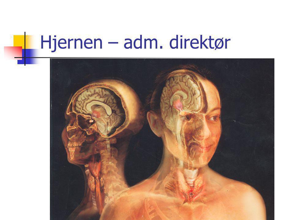 Hjernen – adm. direktør
