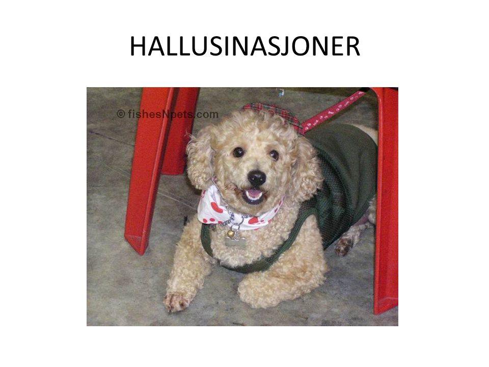 HALLUSINASJONER