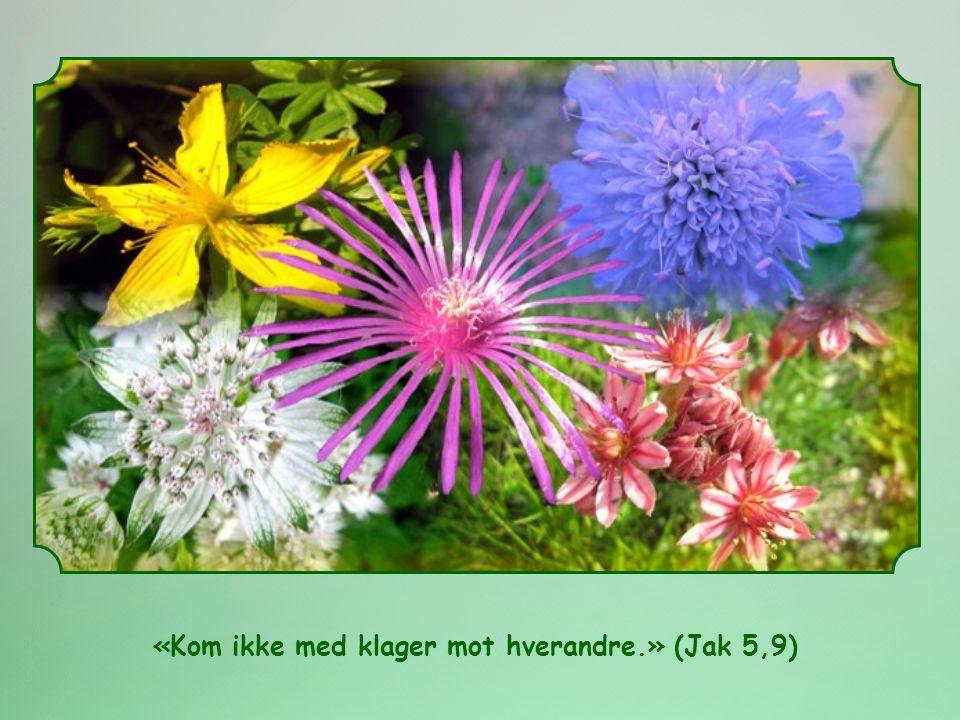 «Kom ikke med klager mot hverandre.» (Jak 5,9) Fra Ord til liv , månedlig utgave av Focolare bevegelsen.