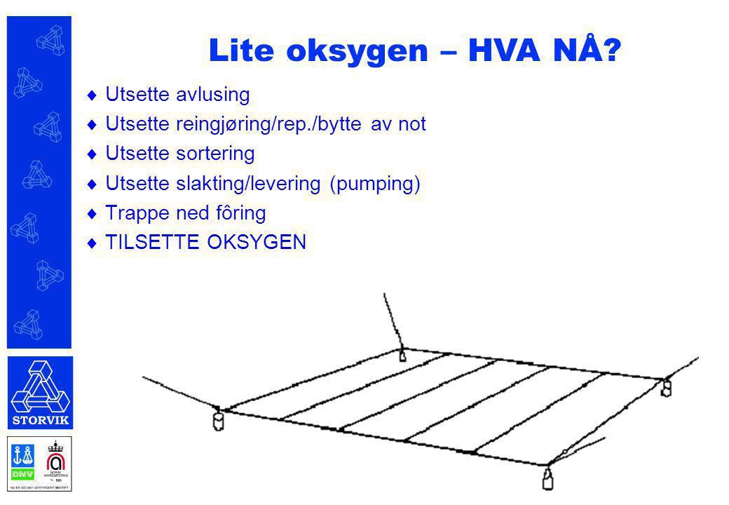  Utsette avlusing  Utsette reingjøring/rep./bytte av not  Utsette sortering  Utsette slakting/levering (pumping)  Trappe ned fôring  TILSETTE OK