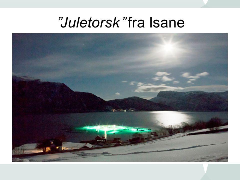 """""""Juletorsk"""" fra Isane"""