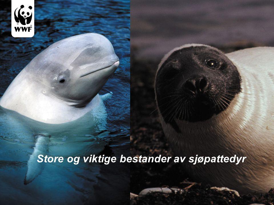Store og viktige bestander av sjøpattedyr