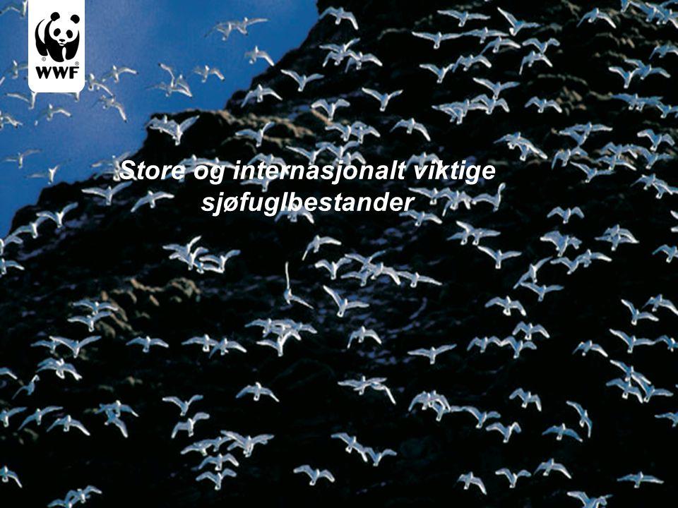Store og internasjonalt viktige sjøfuglbestander