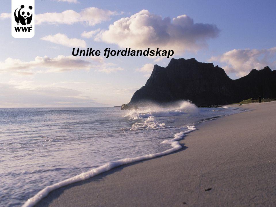 Unike fjordlandskap