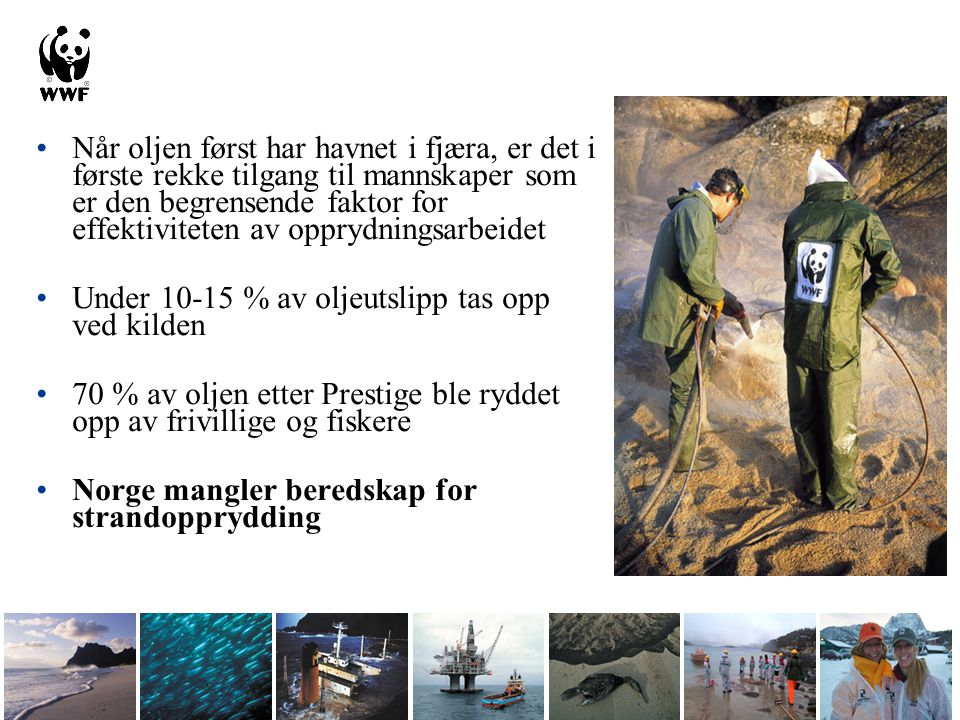 •Når oljen først har havnet i fjæra, er det i første rekke tilgang til mannskaper som er den begrensende faktor for effektiviteten av opprydningsarbeidet •Under 10-15 % av oljeutslipp tas opp ved kilden •70 % av oljen etter Prestige ble ryddet opp av frivillige og fiskere •Norge mangler beredskap for strandopprydding