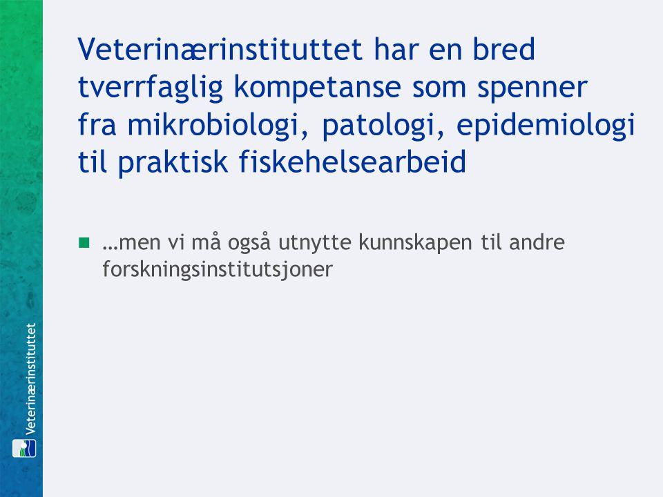 Veterinærinstituttet har en bred tverrfaglig kompetanse som spenner fra mikrobiologi, patologi, epidemiologi til praktisk fiskehelsearbeid  …men vi m