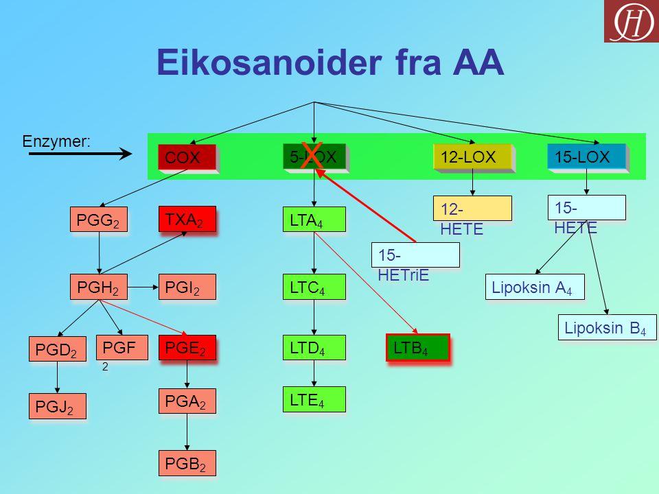 Eikosanoider fra AA COX PGG 2 PGH 2 PGD 2 PGJ 2 PGF 2 PGE 2 PGA 2 PGB 2 5-LOX LTA 4 LTC 4 LTD 4 LTE 4 LTB 4 12-LOX15-LOX 12- HETE Lipoksin A 4 Lipoksi