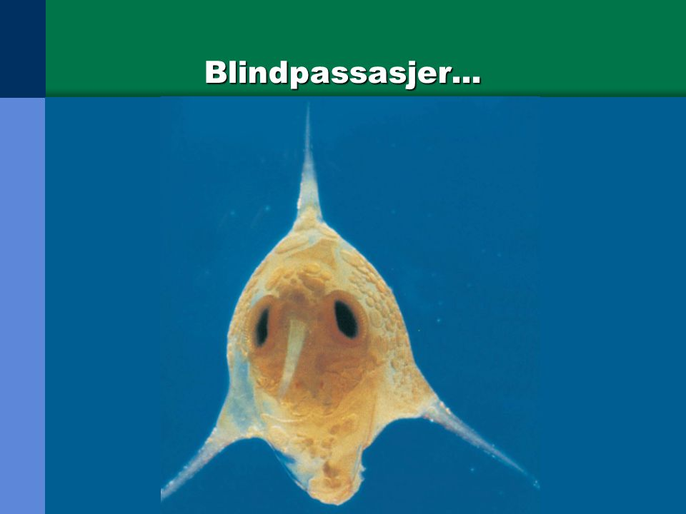 Blindpassasjer...