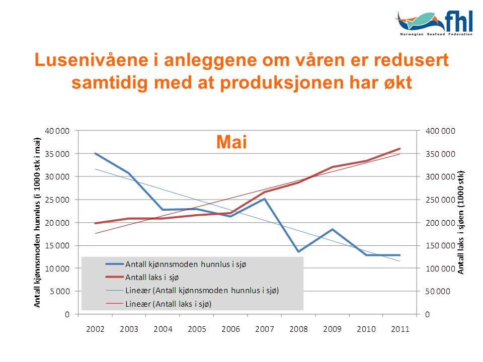 Lusenivåene i anleggene om våren er redusert samtidig med at produksjonen har økt Mai