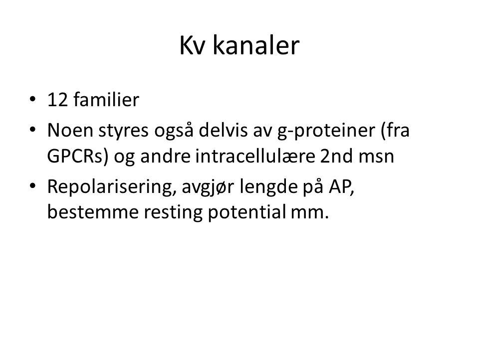 Kv kanaler • 12 familier • Noen styres også delvis av g-proteiner (fra GPCRs) og andre intracellulære 2nd msn • Repolarisering, avgjør lengde på AP, b
