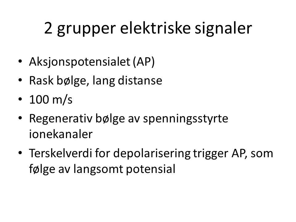 2 grupper elektriske signaler • Aksjonspotensialet (AP) • Rask bølge, lang distanse • 100 m/s • Regenerativ bølge av spenningsstyrte ionekanaler • Ter