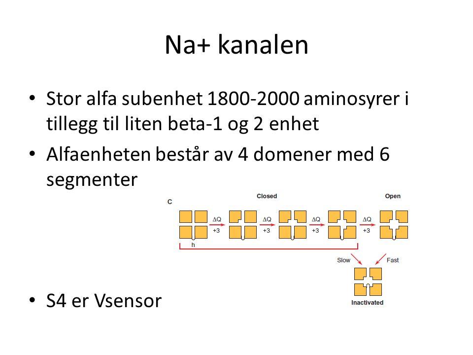 Na+ kanalen • Stor alfa subenhet 1800-2000 aminosyrer i tillegg til liten beta-1 og 2 enhet • Alfaenheten består av 4 domener med 6 segmenter • S4 er