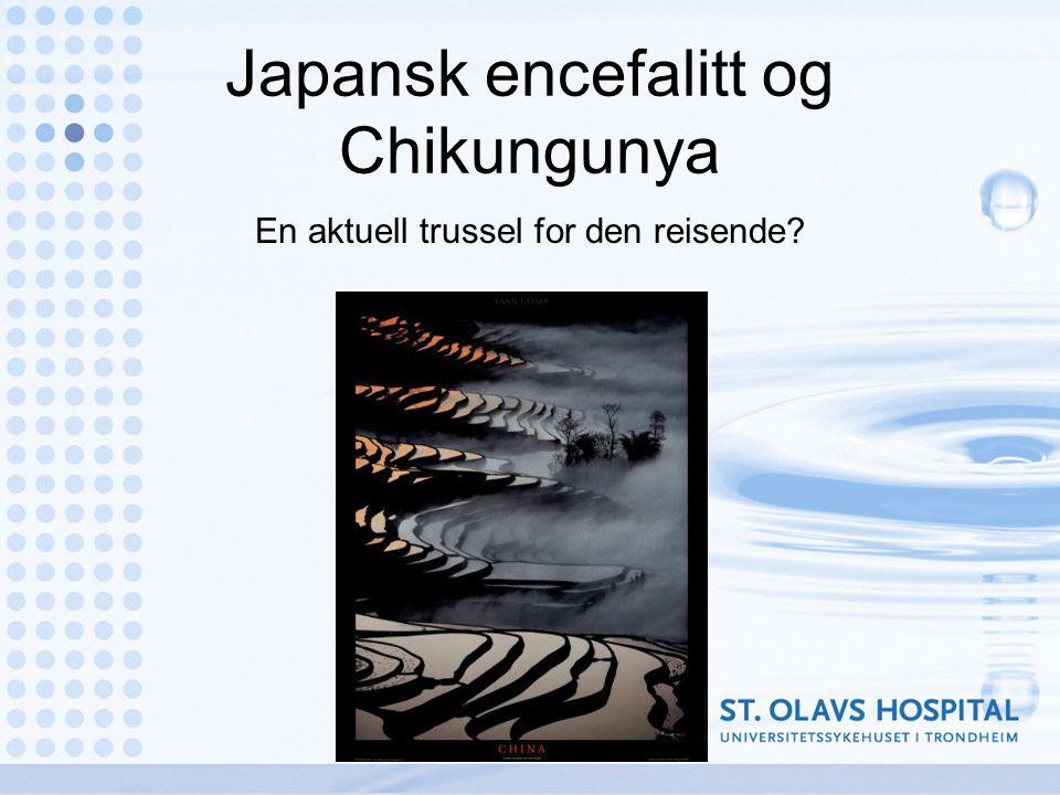 Japansk encefalitt og Chikungunya En aktuell trussel for den reisende