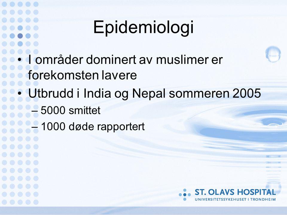 Epidemiologi •I områder dominert av muslimer er forekomsten lavere •Utbrudd i India og Nepal sommeren 2005 –5000 smittet –1000 døde rapportert