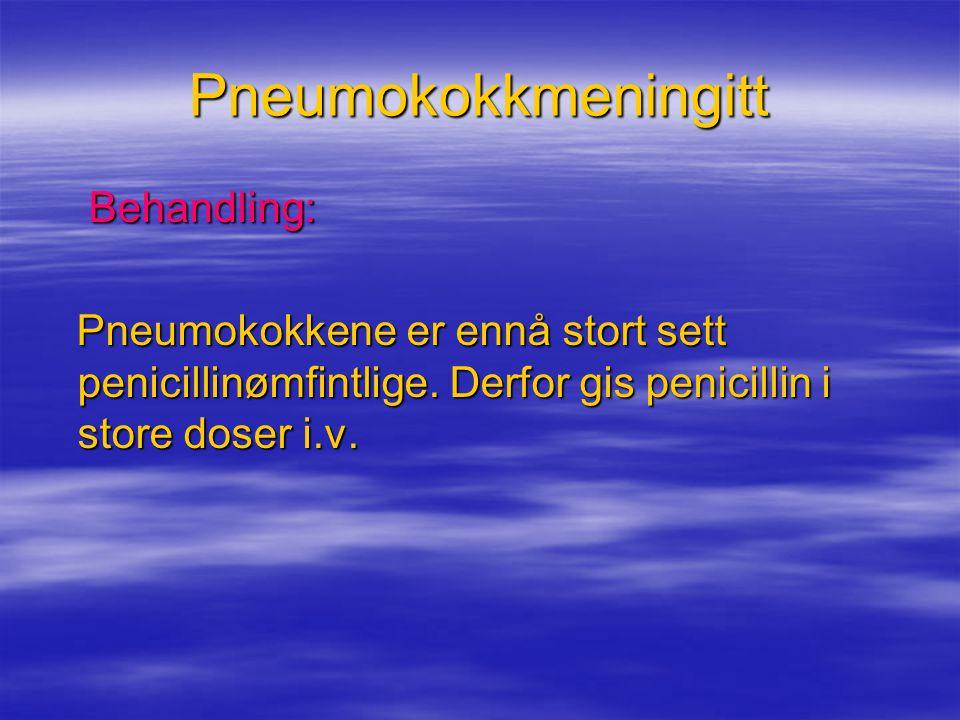 Pneumokokkmeningitt Behandling: Behandling: Pneumokokkene er ennå stort sett penicillinømfintlige. Derfor gis penicillin i store doser i.v. Pneumokokk