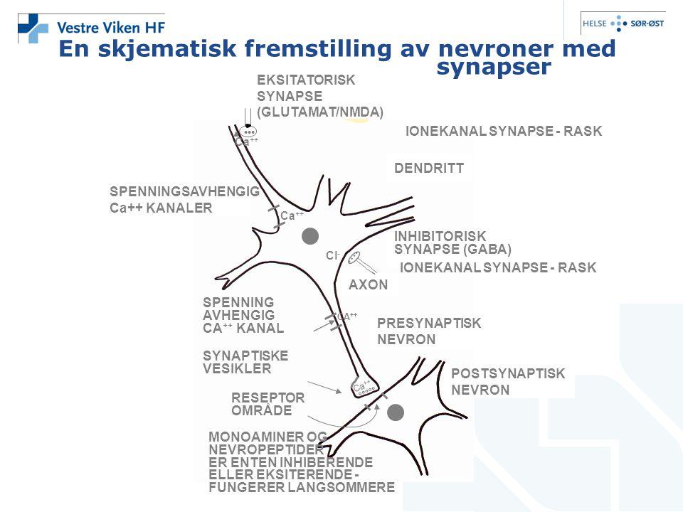 °°°°° En skjematisk fremstilling av nevroner med synapser POSTSYNAPTISK NEVRON PRESYNAPTISK NEVRON AXON INHIBITORISK SYNAPSE (GABA) DENDRITT EKSITATOR
