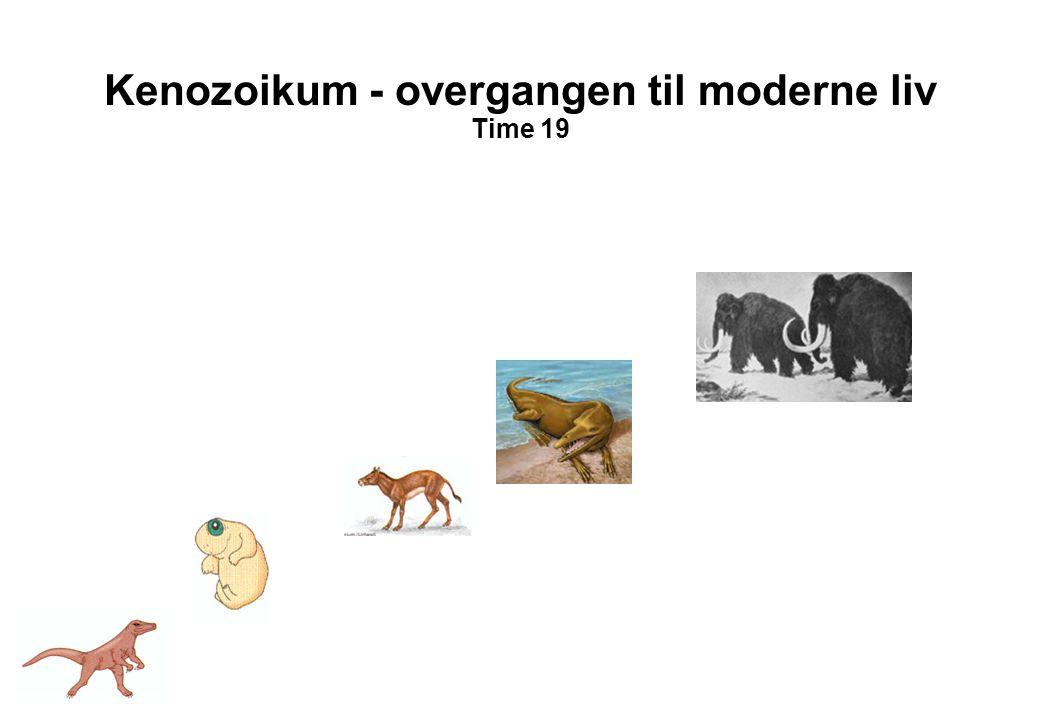 Kenozoikum - overgangen til moderne liv Time 19