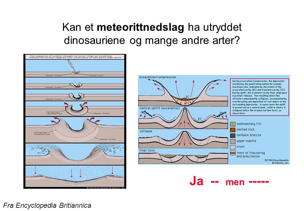 Kan et meteorittnedslag ha utryddet dinosauriene og mange andre arter? Fra Encyclopedia Britiannica Ja -- men -----