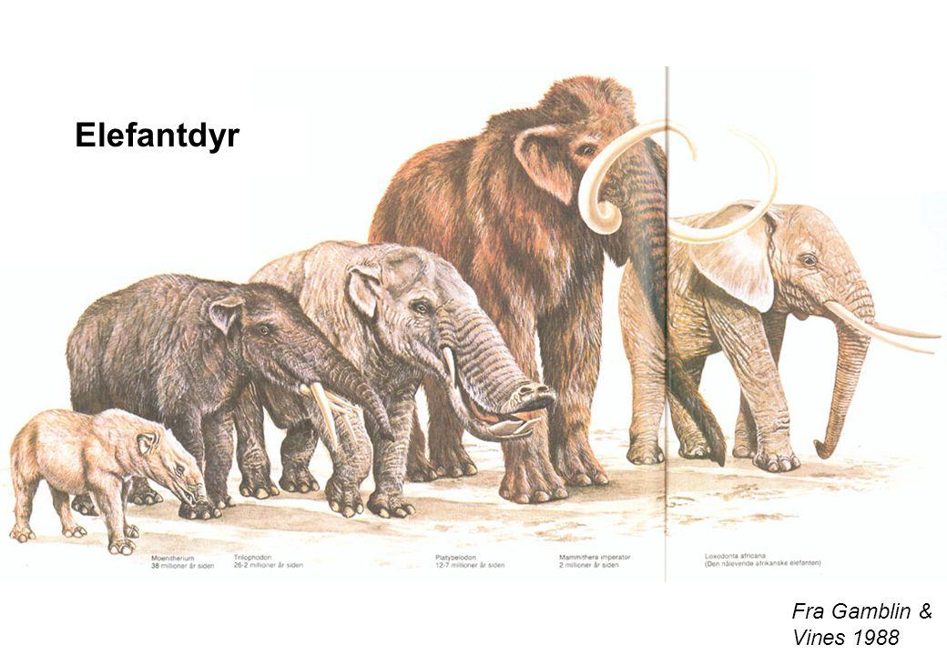 Fra Gamblin & Vines 1988 Elefantdyr