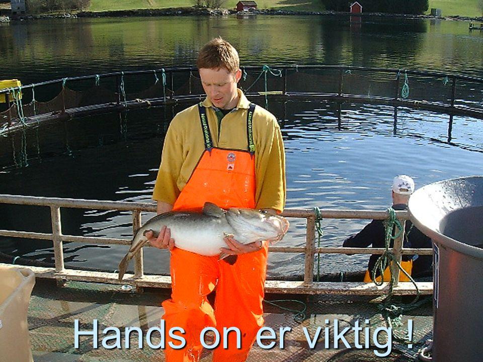 13 Fisken Rømmer – årsaker (AM) F.dir data 2001-2002  Arbeidsbåt – 9%  Tidspress – 8%  Midlertidige løsninger – 6%  Frem.