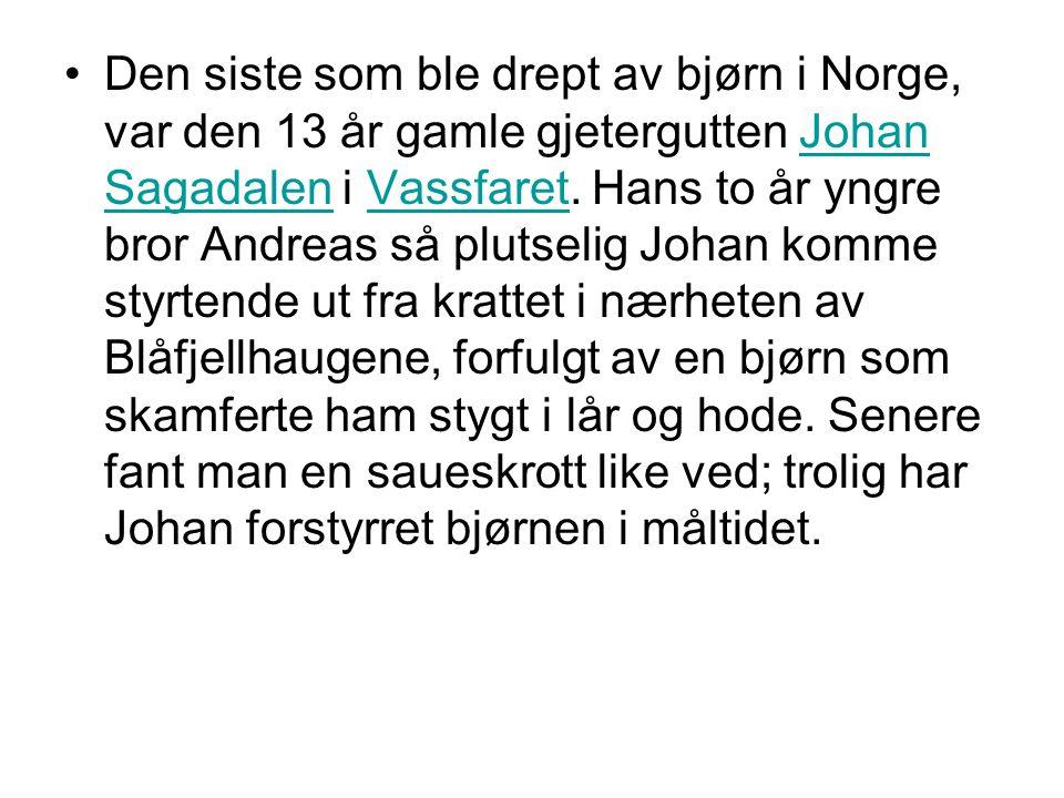 •Den siste som ble drept av bjørn i Norge, var den 13 år gamle gjetergutten Johan Sagadalen i Vassfaret. Hans to år yngre bror Andreas så plutselig Jo