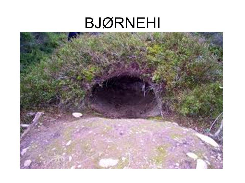 BJØRNEHI