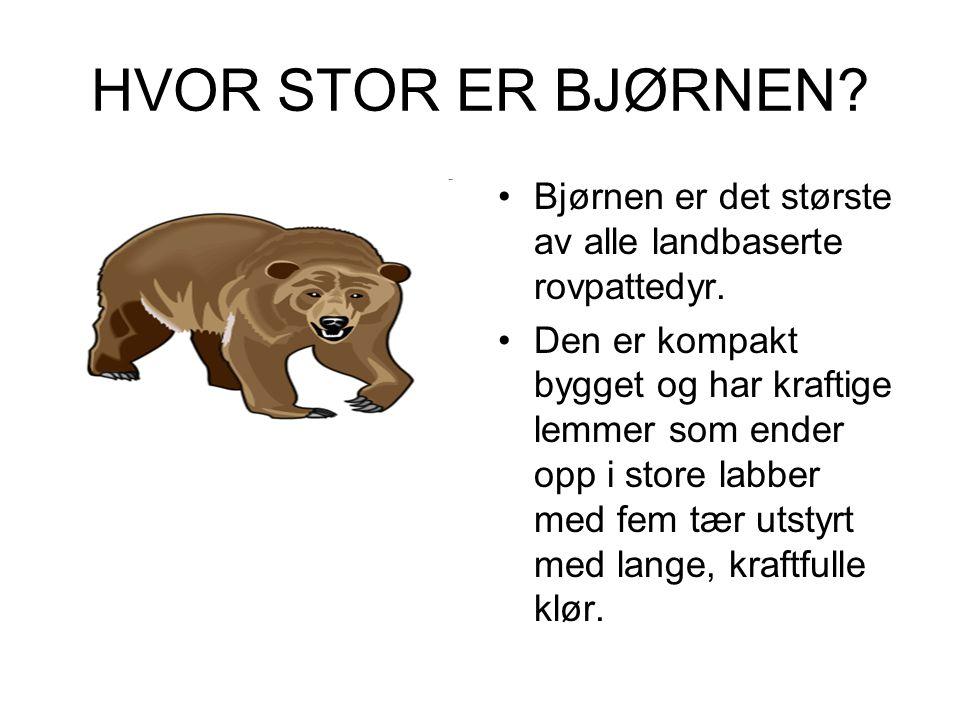 HVOR STOR ER BJØRNEN? •Bjørnen er det største av alle landbaserte rovpattedyr. •Den er kompakt bygget og har kraftige lemmer som ender opp i store lab