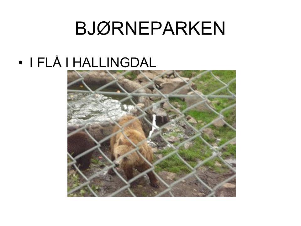 BJØRNEPARKEN •I FLÅ I HALLINGDAL