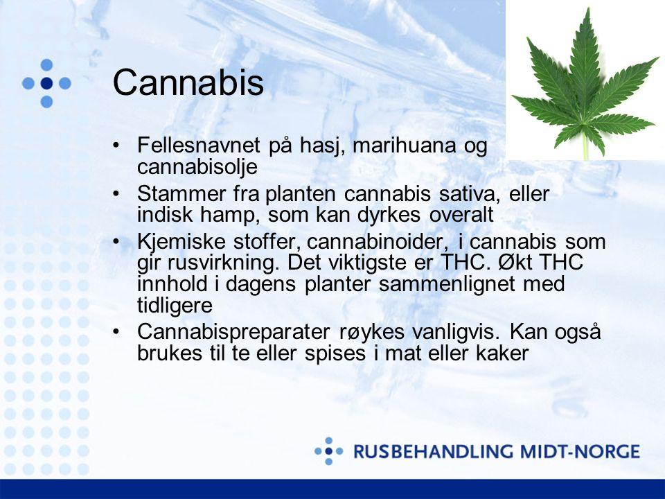 Cannabis •Fellesnavnet på hasj, marihuana og cannabisolje •Stammer fra planten cannabis sativa, eller indisk hamp, som kan dyrkes overalt •Kjemiske stoffer, cannabinoider, i cannabis som gir rusvirkning.