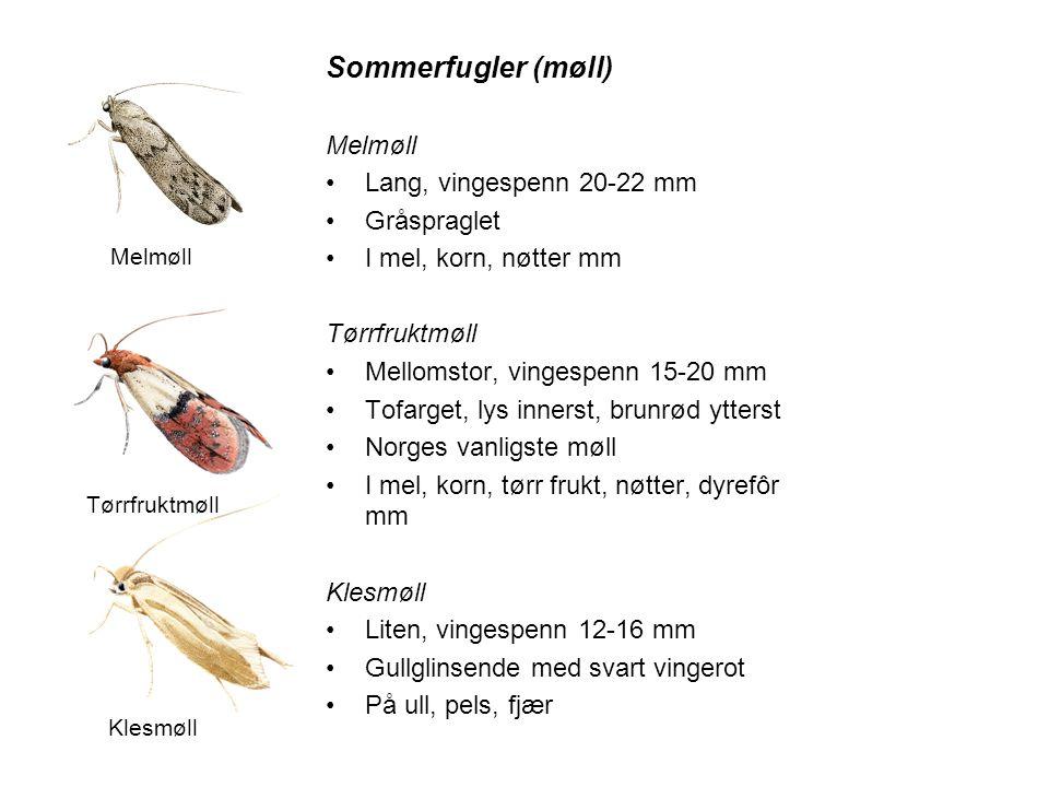 Sommerfugler (møll) Melmøll •Lang, vingespenn 20-22 mm •Gråspraglet •I mel, korn, nøtter mm Tørrfruktmøll •Mellomstor, vingespenn 15-20 mm •Tofarget,
