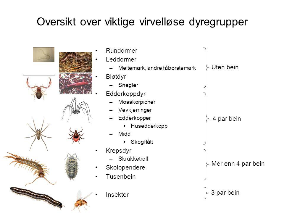 Oversikt over viktige virvelløse dyregrupper •Rundormer •Leddormer –Meitemark, andre fåbørstemark •Bløtdyr –Snegler •Edderkoppdyr –Mosskorpioner –Vevk