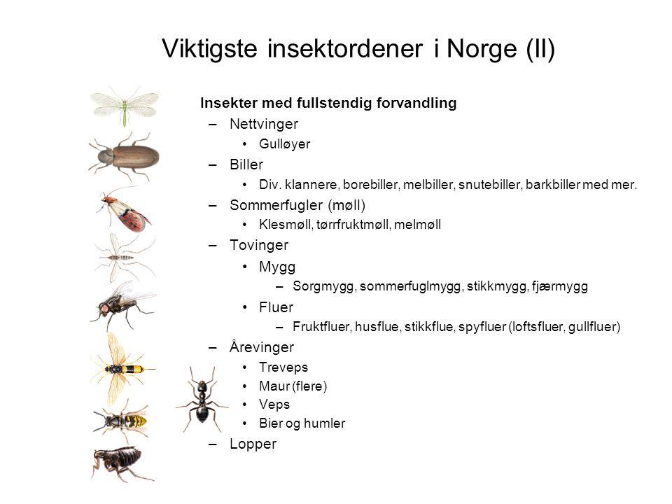 Viktigste insektordener i Norge (II) Insekter med fullstendig forvandling –Nettvinger •Gulløyer –Biller •Div. klannere, borebiller, melbiller, snutebi