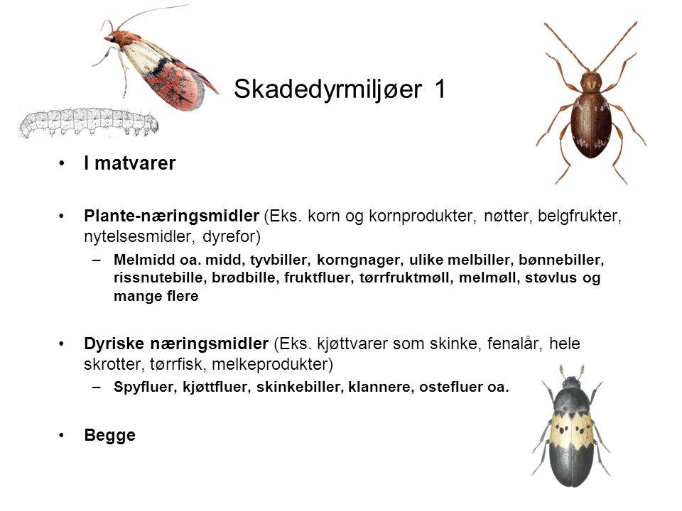 Skadedyrmiljøer 2 •I tekstiler, pels, fjær, ull etc –Heterogen gruppe: Fra vepse-, dyrebol, mugg, andre insekter, Ulike klannere, klesmøll, pelsmøll, humlebolmøll, humleblomsterflue, muggbiller mm •I trevirke –Stripet borebille, husbukk, stokkmaur, andre maur, bolverksbille, råteborebille Insekter fra fyringsved: trebukker, barkbiller, snutebiller, treveps mm.