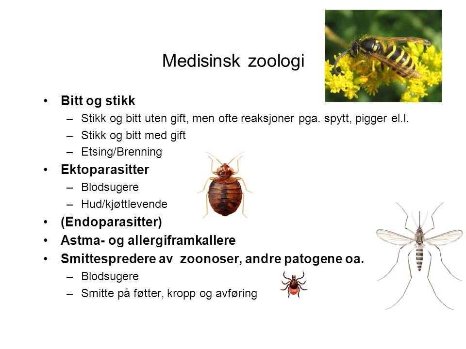 Vingeløse insekter Spretthaler •Meget små, vanligvis under 3 mm.