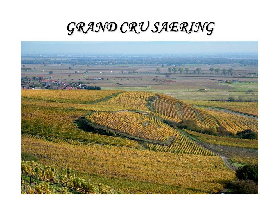 GRAND CRU SAERING