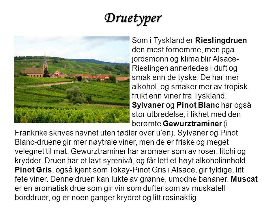 Druetyper Som i Tyskland er Rieslingdruen den mest fornemme, men pga.
