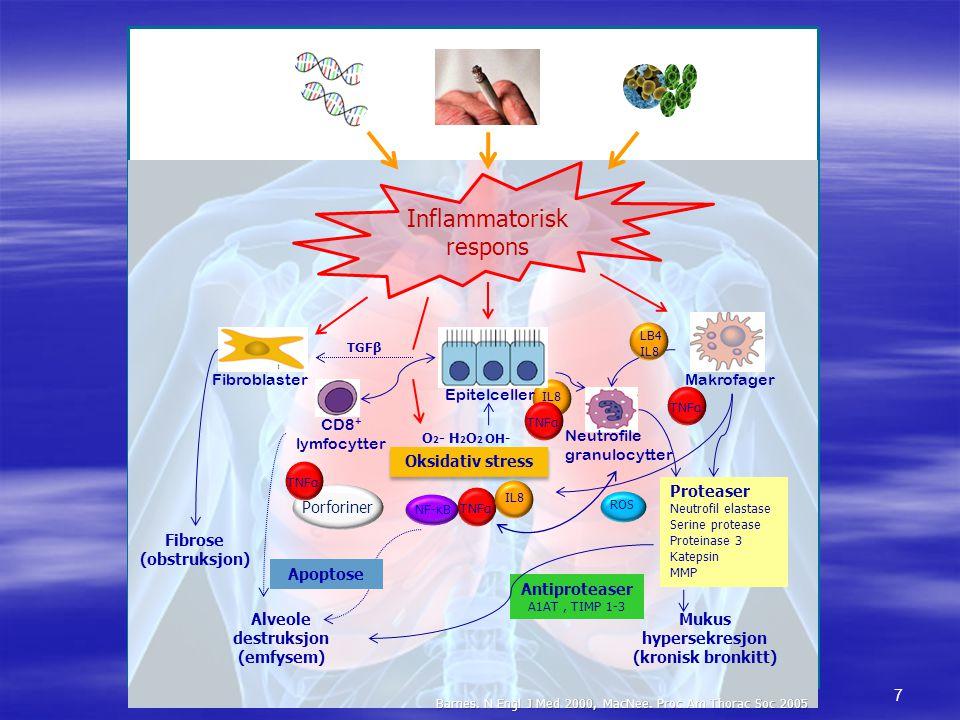 Barnes. N Engl J Med 2000, MacNee. Proc Am Thorac Soc 2005 Inflammatorisk respons Makrofager Fibroblaster CD8 + lymfocytter Neutrofile granulocytter P