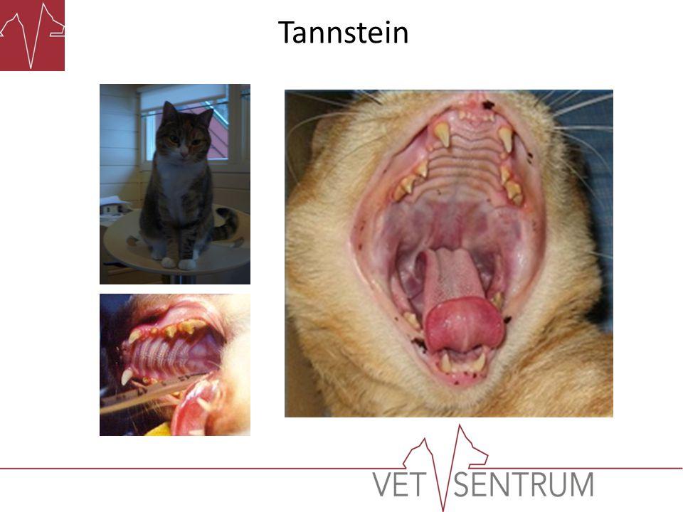 • Unngå tannstein går ikke an.• Redusering av tannsteindannelsen går an.