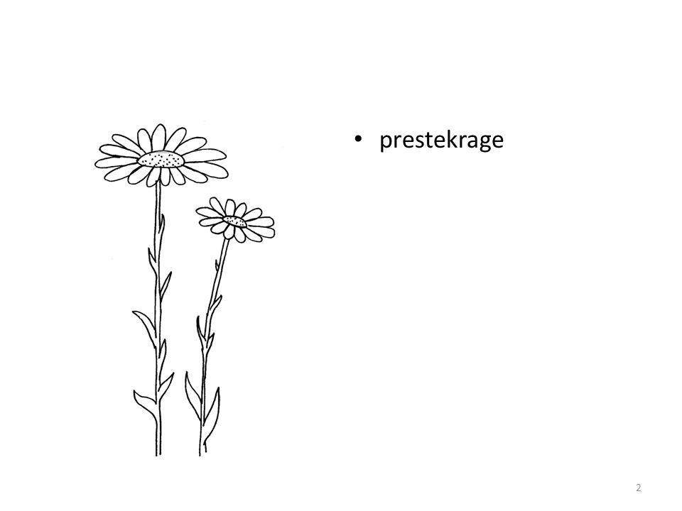 • prestekrage 2
