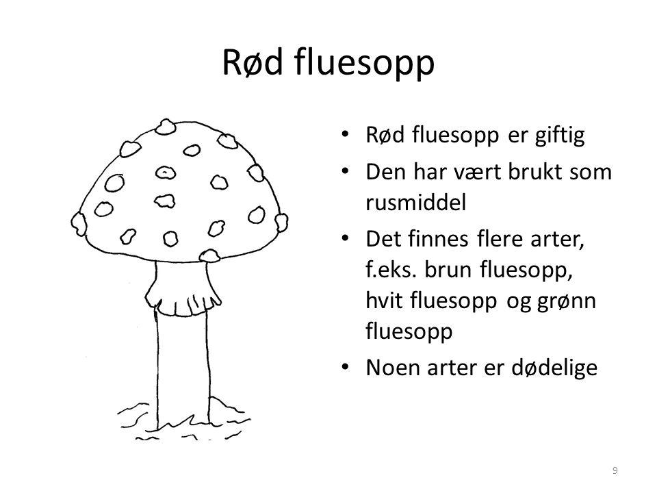 Rød fluesopp • Rød fluesopp er giftig • Den har vært brukt som rusmiddel • Det finnes flere arter, f.eks. brun fluesopp, hvit fluesopp og grønn flueso