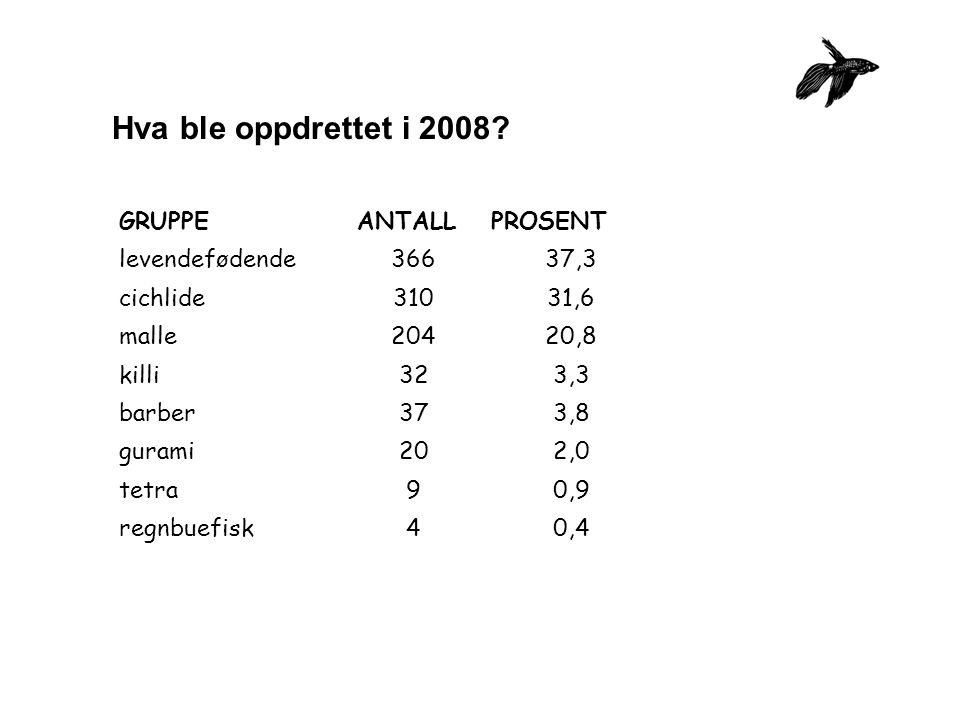 Hva ble oppdrettet i 2008? GRUPPEANTALLPROSENT levendefødende36637,3 cichlide31031,6 malle20420,8 killi323,3 barber373,8 gurami202,0 tetra90,9 regnbue