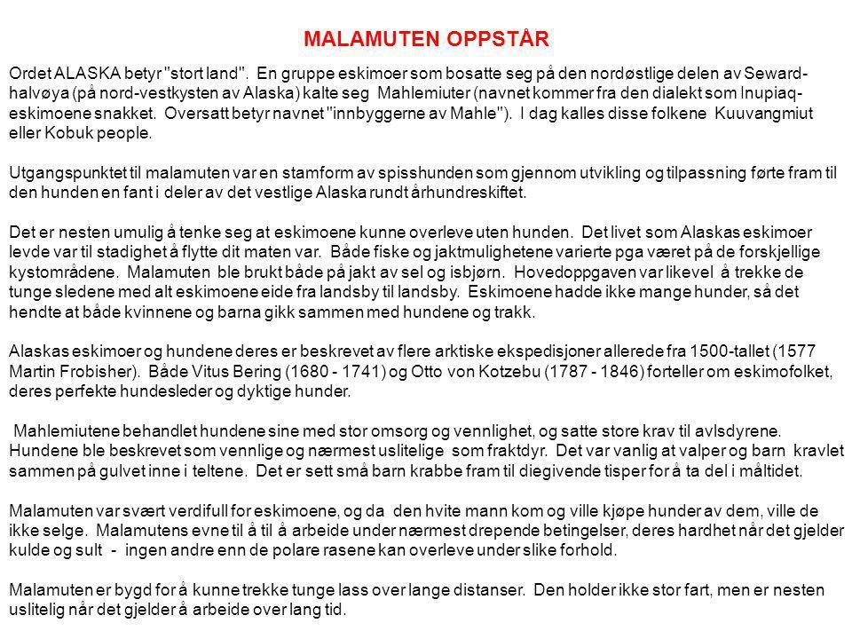ALASKAN MALAMUTE HISTORIKK Ved Tove R.