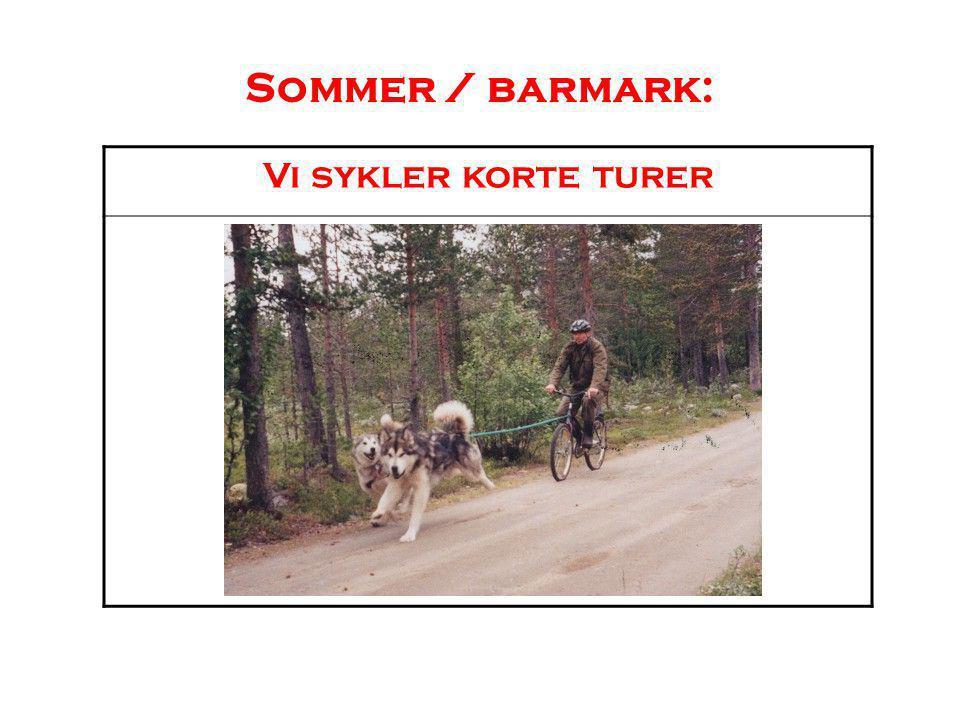 Malamuten som brukshund Malamuten er en frakthund, som er laget for å kunne dra tunge lass over tid.