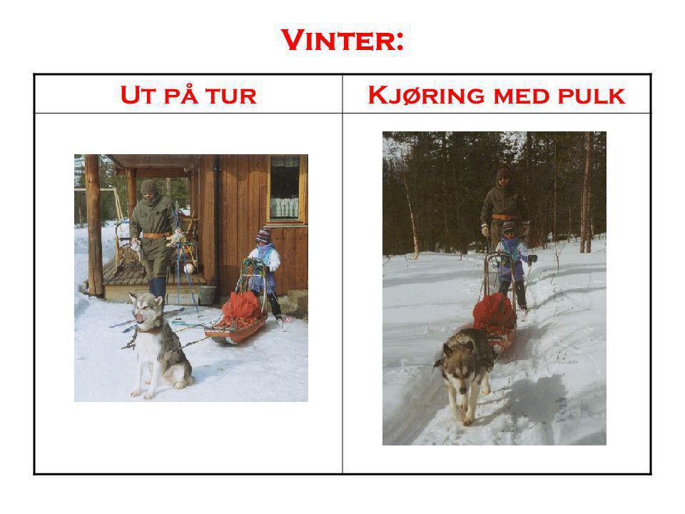 Vinter: Ut på turKjøring med pulk